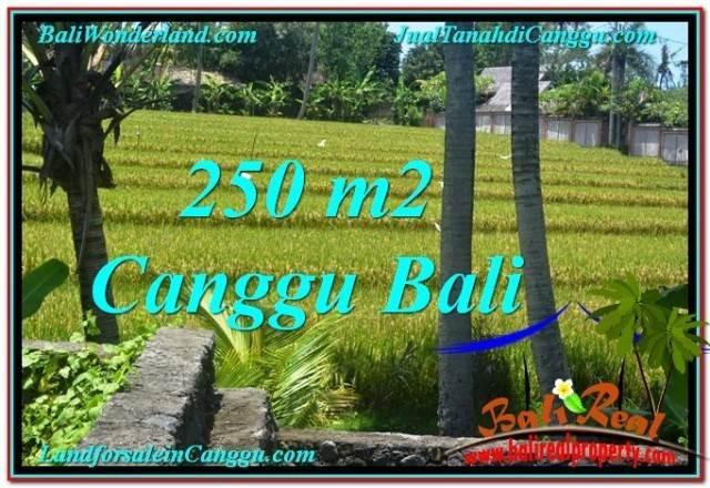 TANAH di CANGGU JUAL 2.5 Are View sawah lingkungan villa