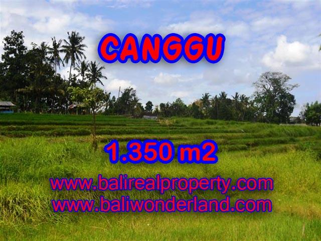 Tanah dijual di Canggu Bali 13,5 Are di Canggu Pererenan