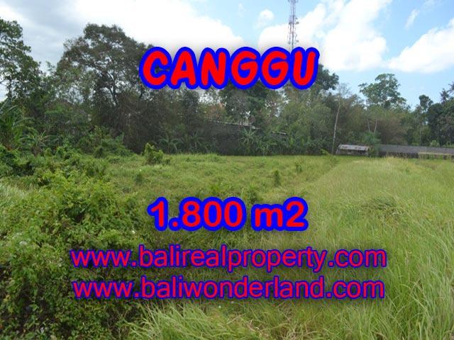 Jual tanah di Canggu 18 Are View sawah di Canggu Batu Bolong