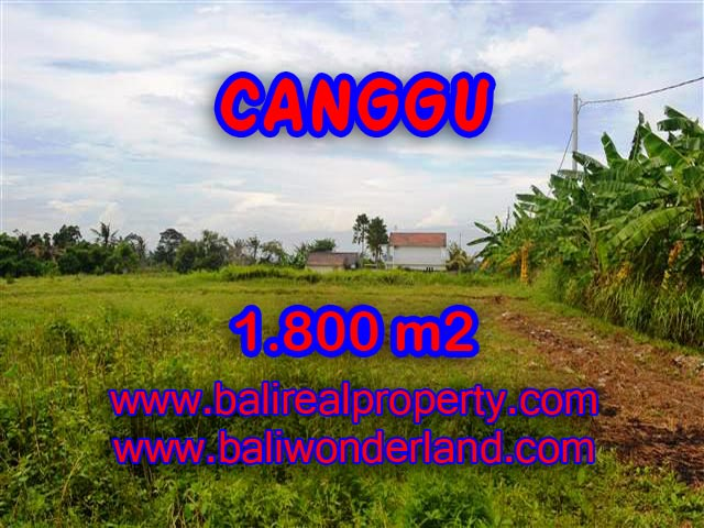 TANAH MURAH DI CANGGU DIJUAL CUMA RP 4.750.000 / M2