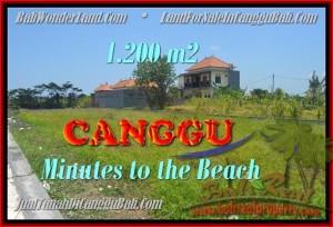 DIJUAL MURAH TANAH di CANGGU BALI Untuk INVESTASI TJCG166