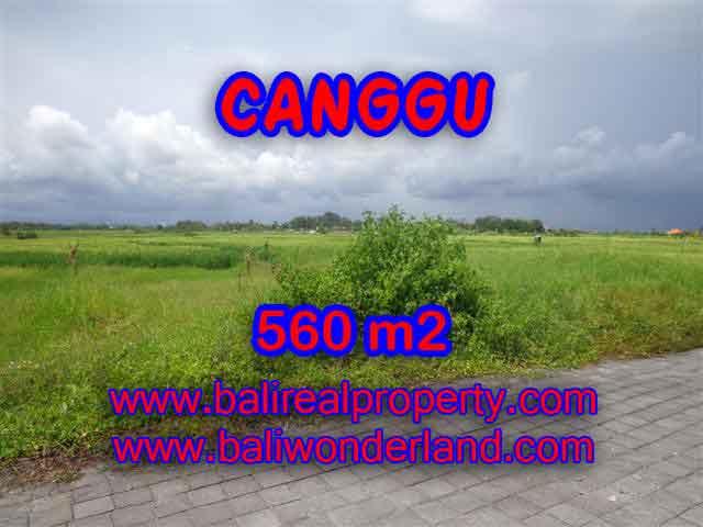 TANAH MURAH DIJUAL di CANGGU TJCG138